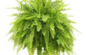 cool trees plant wonderful artificial plants near me best indoor palm trees