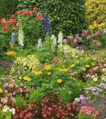 flower best flowers for full sun garden trends