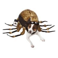 fuzzy tarantula halloween dog costume with same day shipping