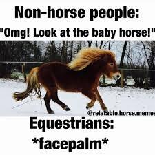 Meme Horse - horse memes the horse forum
