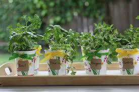 diy herb garden fresh herb party favor diy catch my party