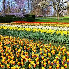Beautiful Pictures Of Spring by The Most Beautiful Spring Garden In The World Holland U0027s Keukenhof