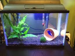 How To Set Up A Simple Betta Tank Fish Pinterest
