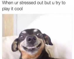 Stressed Out Memes - dopl3r com memes when ur stressed out but u try to play it cool