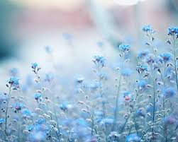 Blue Flower Backgrounds - 63 best flower images on pinterest flowers flower and pretty