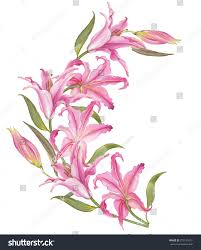 watercolor lily flower stock illustration 273131657 shutterstock