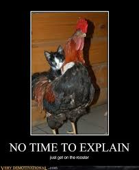 Rooster Meme - very demotivational rooster page 2 very demotivational