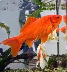 freshwater frenzy which freshwater aquarium fish live