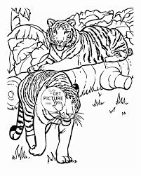 tigers animal coloring page for kids animal coloring pages