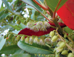 pacific horticulture society striving for diversity japanese