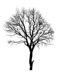 tree shape royalty free stock image storyblocks