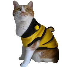 Halloween Costumes Cats 25 Costumes Cats Ideas