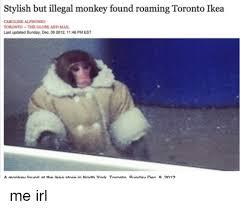 Ikea Monkey Meme - stylish but illegal monkey found roaming toronto ikea caroline
