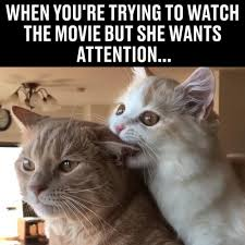 Smiling Cat Meme - pay attention to me memes pinterest pay attention cat and