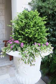 Outdoor Pots And Planters by Best 25 Boxwood Planters Ideas On Pinterest Outdoor Potted