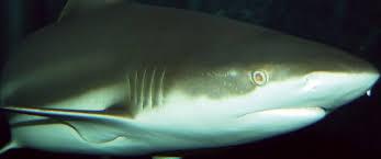 fort wayne children u0027s zoo blacktip reef shark