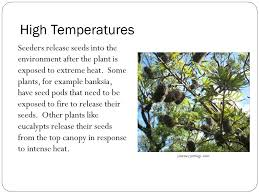 High Heat Plants Maintaining A Balance Topic 5 Temperature Regulation In Plants
