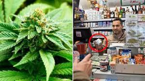 bureau de tabac a vendre suisse le pays lance la vente de cannabis en bureau de tabac