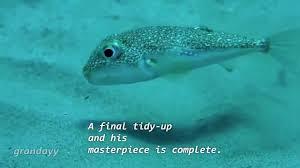 Nude Memes - send nudes puffer fish meme youtube