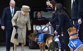 queen elizabeth dog video queen given dog guard of honour telegraph