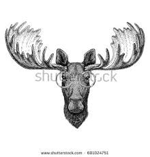 hipster moose elk image tattoo logo stock vector 608620142