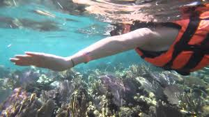 New Mexico snorkeling images Swim snorkeling adventure tour cancun mexico jpg