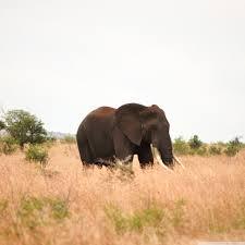 apple wallpaper elephant elephant 4k hd desktop wallpaper for dual monitor desktops
