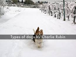 types of dogs that rule by charlesrubin