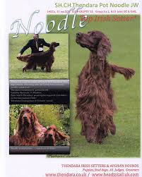afghan hound judging list the irish setters u0026 afghan hounds of thendara