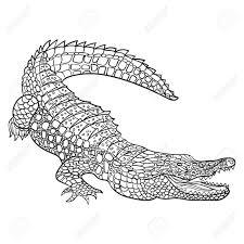 Vector Illustration Monochrome Dessinée à La Main De Crocodile