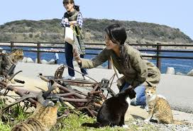 cat island cat island draws tourists residents regret loss of tranquility