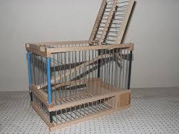 uccelli in gabbia gabbia cinciarella trappola per voliera canarini uccelli in legno