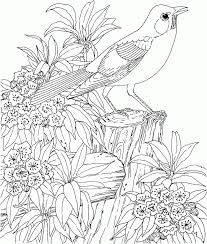 coloring pages birds fablesfromthefriends