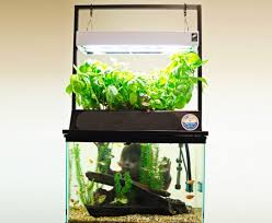 aquaponic gardening kit what is hydroponic gardening