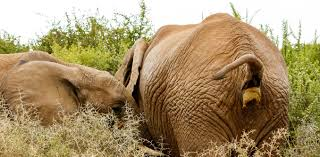 physics of poo why it takes you and an elephant the same amount