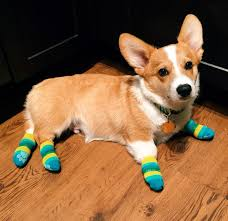 255 best corgi nation images on pinterest corgis pembroke welsh