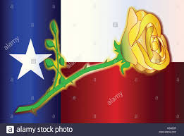 Texas Flag Image Yellow Rose Of Texas Stock Photos U0026 Yellow Rose Of Texas Stock