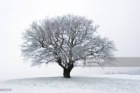 winter tree in the snow stock photo getty images