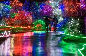 Zoo Lights Houston by Christmas Zoo Lights Christmas Lights Decoration