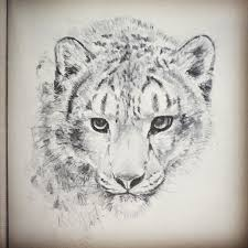 best 25 snow leopard drawing ideas on pinterest snow leopard