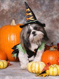 Halloween Costumes Dogs Cutest Puppy Costumes 2011 2011 Halloween Pet Costume Photo Contest Womansday