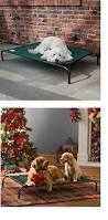 Elevated Dog Beds For Large Dogs Best Rated Dog Beds For Large Dogs For Extra Comfort And Support