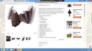 i spirit halloween spirit halloween screeching bat youtube