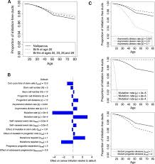 mathematical modeling links pregnancy associated changes and