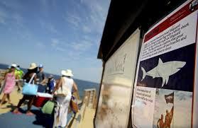 sharks rattle nerves on cape cod news telegram com worcester ma