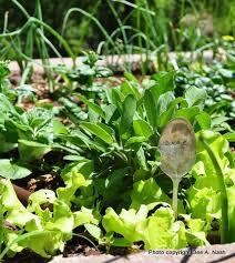 best and easiest vegetables to grow in oklahoma red dirt ramblings