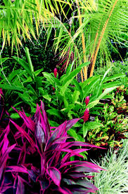 South Florida Landscaping Ideas This Tropical Landscape In Boca Raton Florida Features Ti Plants