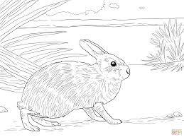 rabbit sleeps in the garden coloring page free printable