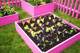 vegetable gardening for beginners start simple for the best results