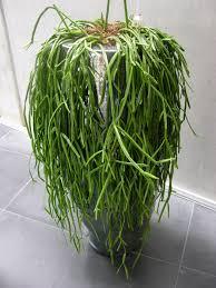 Office Plants Office Plants Rental Plants